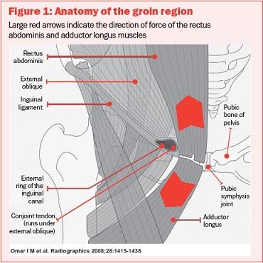 Anatomie Liesblessure